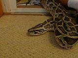 21_snake_l